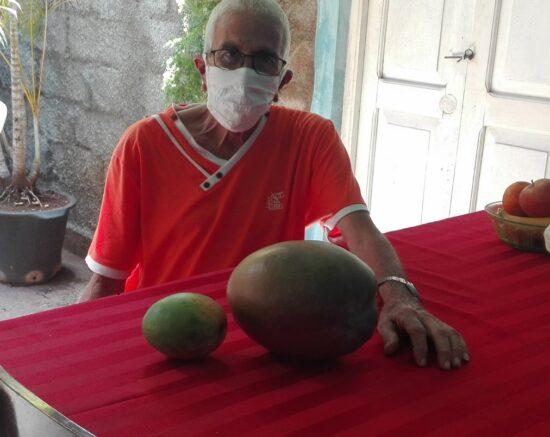 El trinitario Germán Pomares agradece la vitalidad de la tierra de su patio que le regala frutos de talla extra. Foto: Ana Martha Panadés Rodríguez / Radio Trinidad.